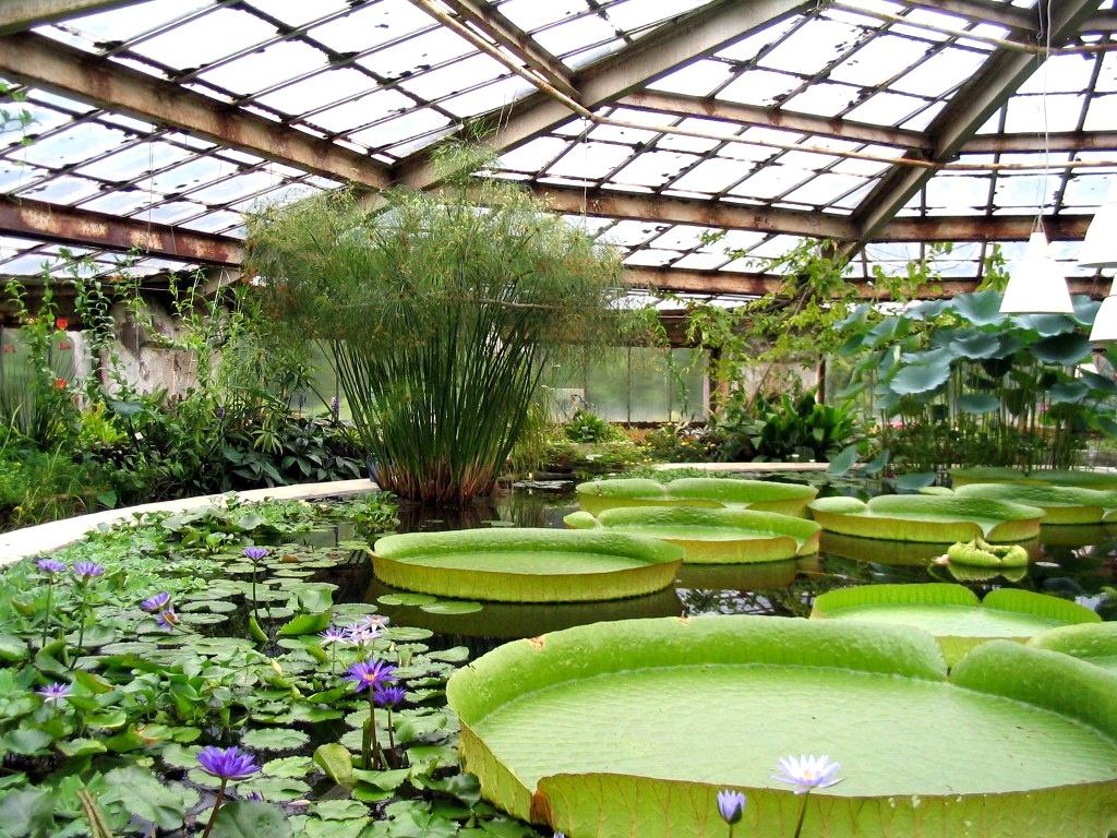 ботаничсекий сад цветы